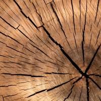 Okna drewniane – z jakiego drewna powinny być wykonane?