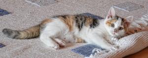 cat-535011_640