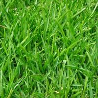 Trawnik a jednak wykładzina